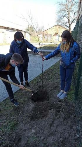 Україна - ініціатор озеленення планети - Слов'янська школа №23